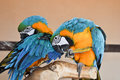 Free Parrot Stock Photos - 14038863