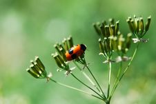 Free A Little Bug Stock Photo - 14030400