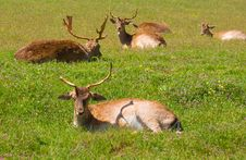 Free Deer Stock Photo - 14031320