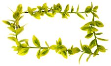 Free Green Leaves Royalty Free Stock Image - 14031406