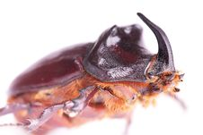 Free Beetle Stock Photos - 14032503