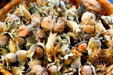 Free Nuts Stock Photos - 14032843