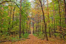 Free Autumn Stock Photo - 14033370