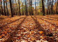 Free Autumn Stock Photography - 14033372