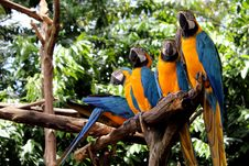 Free Parrots Royalty Free Stock Image - 14033686