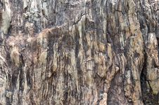Free Fossil Wood Surface As Abstract Image Stock Images - 14033694