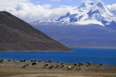 Free Sheeps Near Lake Royalty Free Stock Photography - 14034287