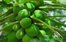 Free Papaya Royalty Free Stock Image - 14034476