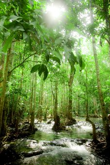 Free Forest And River. Stock Image - 14034551
