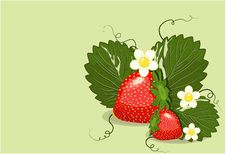Free Strawberries Stock Photos - 14037943