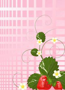 Free Strawberries Stock Photo - 14037990
