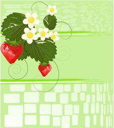 Free Strawberries Stock Image - 14038071