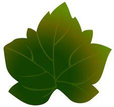 Free Green Leaf Stock Photo - 14038840