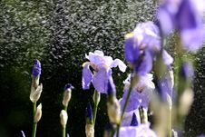 Free Water Drops On Beautiful Flowers Stock Photo - 14038850