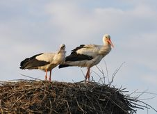 Storks In The Nest Royalty Free Stock Images