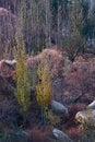 Free Autumn Woods Stock Photography - 14041992