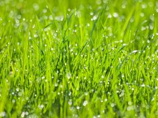 Free Grass. Royalty Free Stock Image - 14040066