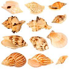 Seashells Collection. Royalty Free Stock Photo