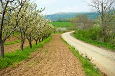 Orchard Near A Country Road Royalty Free Stock Photo