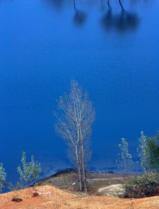 Free Blue Lake And Lonely Tree Royalty Free Stock Images - 14042099