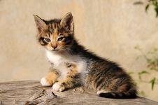 Free My Little Cat Stock Image - 14042331