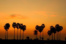 Free Sky Line And Palm Tree Royalty Free Stock Photography - 14042427