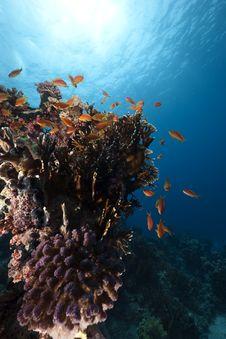 Free Ocean And Fish Stock Image - 14043441