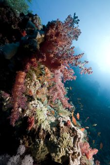 Free Ocean And Fish Royalty Free Stock Photos - 14043788