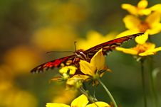Butterfly On Yellow Flower Stock Images