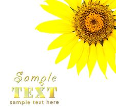 Free Bright Young Sunflower Stock Photography - 14045612