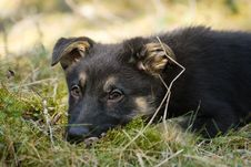 Free Puppy Alone In The Forest Stock Photography - 14046822