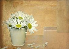 Free Losing Petals Stock Photo - 14048220
