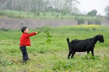 Free Boy And Black Goat Stock Photo - 14048590