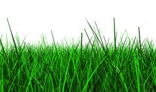 Free Grass Background Stock Images - 14048764