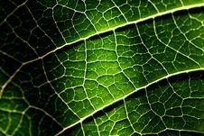 Free Closeup Of A Leaf Texture Stock Photos - 14049993