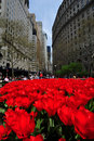 Free Red Tulips At Green Bowl Park Stock Photos - 14053433