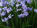 Free Purple Flowers Stock Photo - 14053500