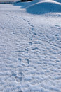 Free Footprints On White Snow Covered Links Golf Course Royalty Free Stock Images - 14053969