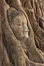 Free Wat Mahathat Stock Images - 14054834
