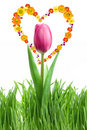 Free Purple Tulip And Green Grass With Heart From Flowe Royalty Free Stock Photography - 14055227