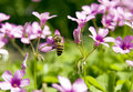 Free Bee In Flower Stock Photos - 14057173