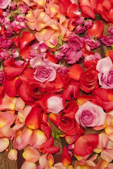 Free Multicolored Petals Of Roses Royalty Free Stock Photo - 14051155