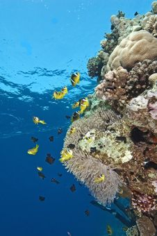Free Clownfish On A Coral Reef Stock Image - 14052551