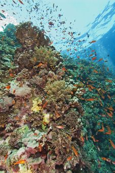 Beautiful Coral Reef Scene Royalty Free Stock Image