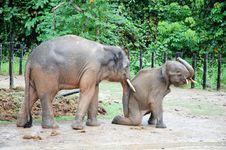 Free Elephant Stock Images - 14053404