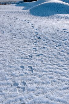 Footprints On White Snow Covered Links Golf Course Royalty Free Stock Images