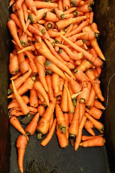 Carrot Harvest Stock Images