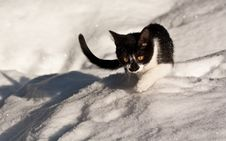 Free Cat On The Snow Royalty Free Stock Photos - 14055228