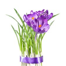 Free Crocus Bouquet Royalty Free Stock Image - 14055346