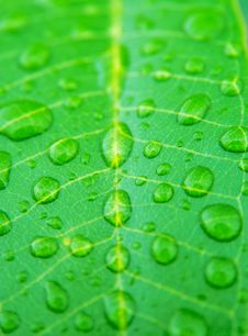 Free Dew On Leaves Stock Photography - 14055692